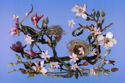 nested-magnolias-nl-light-blue